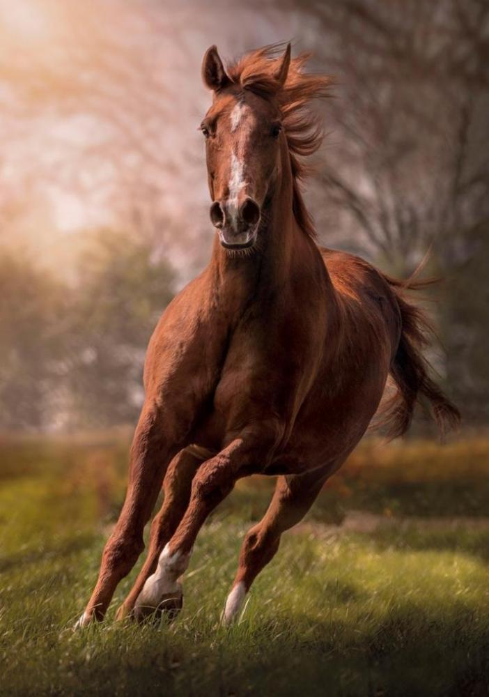 Картинки скакуны лошади