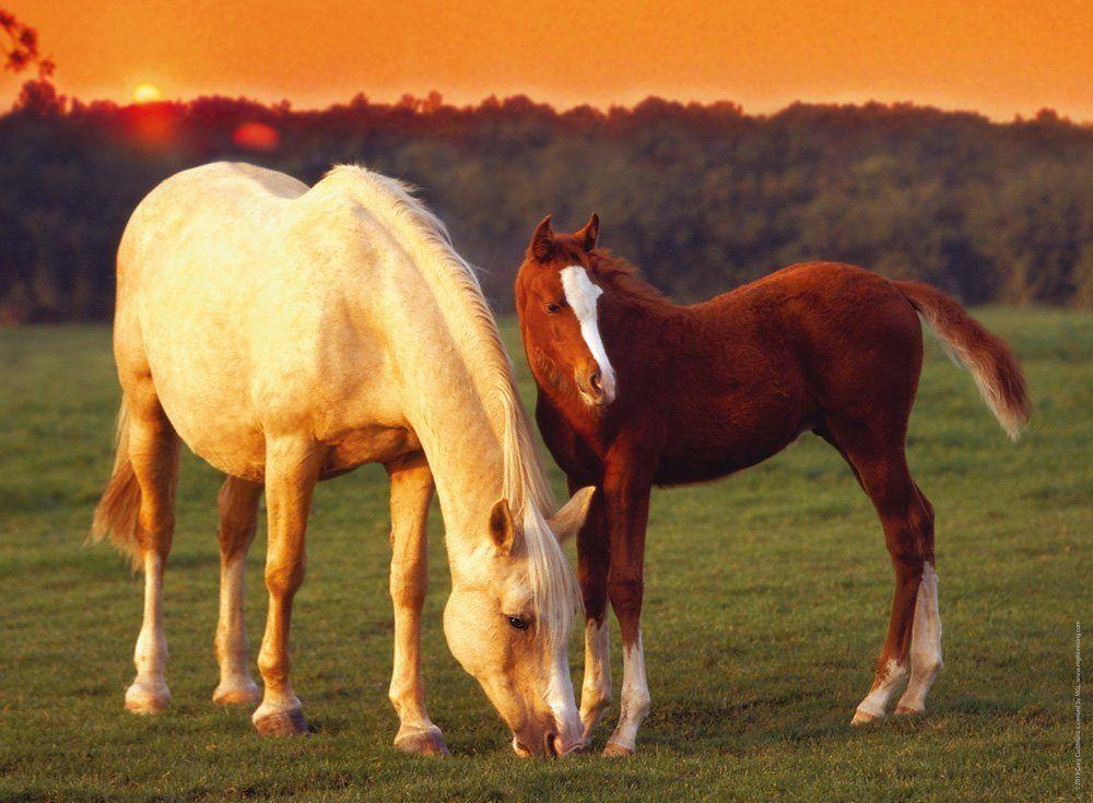 В картинках лошадей, сделать скрепок