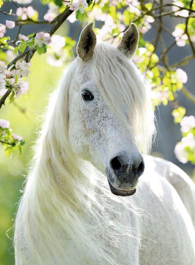 Картинки лошадей самых красивых, юбилеем