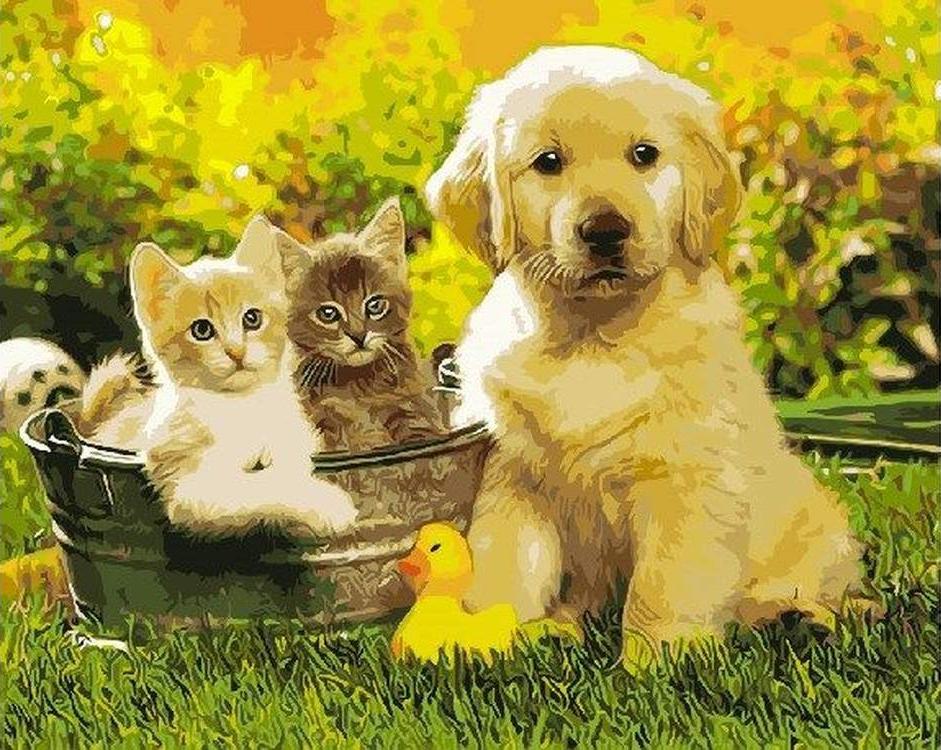 Картинки щеночек с котенком