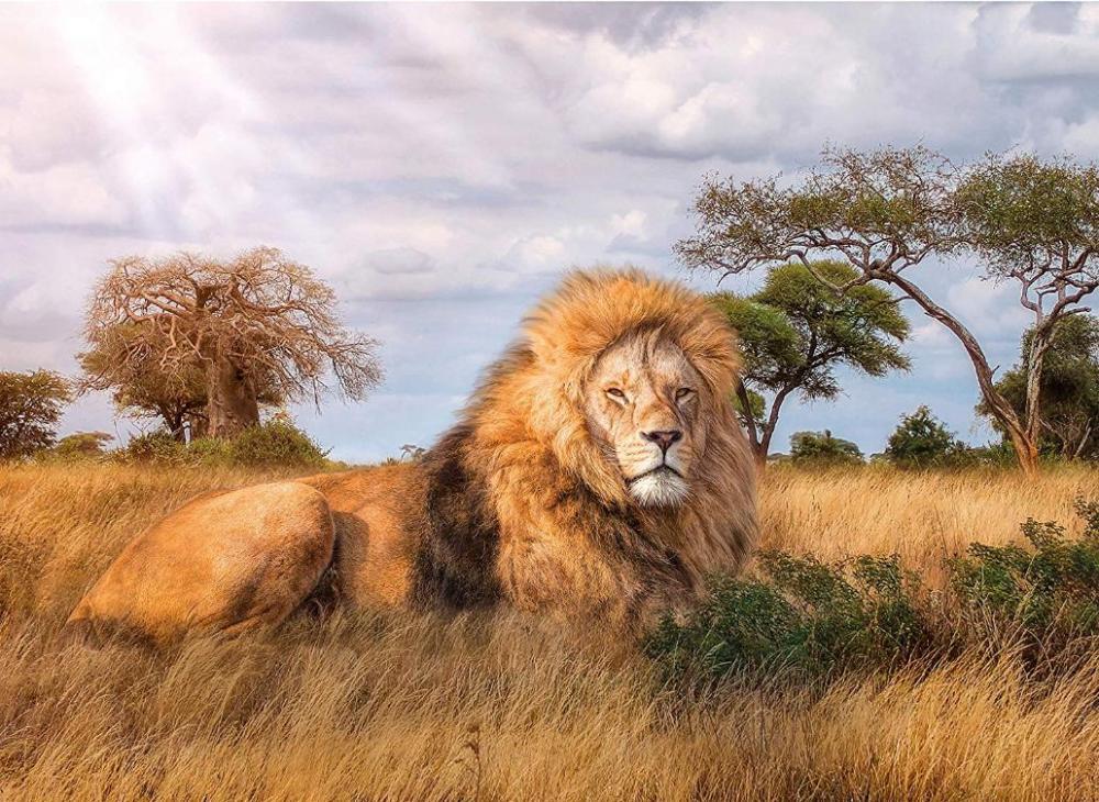 этого картины со львами фото погоне